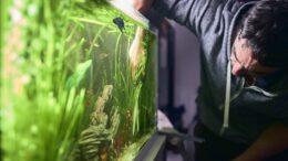 Hvad er et akvarie? - Akvariefisk - TXS