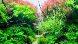 Hedder det akvarie eller akvarium? - TXS